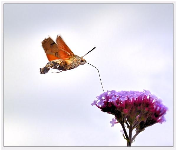 High Flyer !! by bricurtis