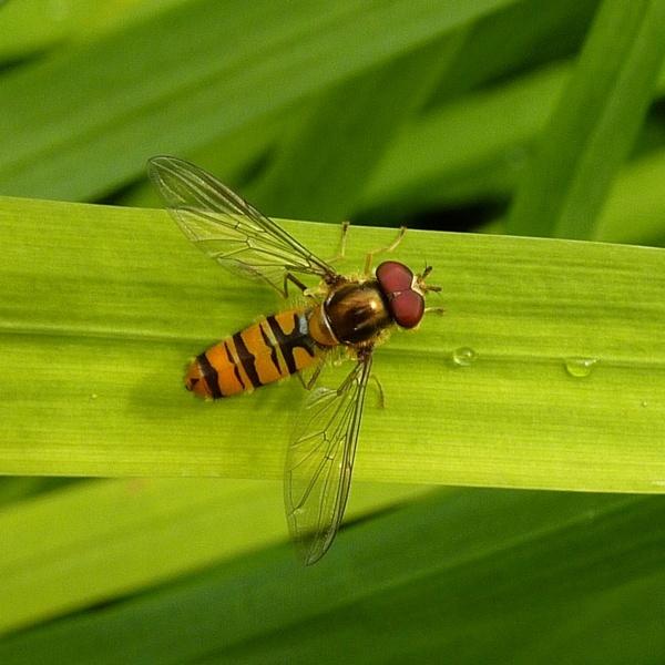 Marmalade on leaf
