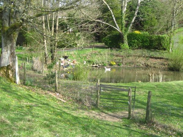 Duck Pond by Brilane