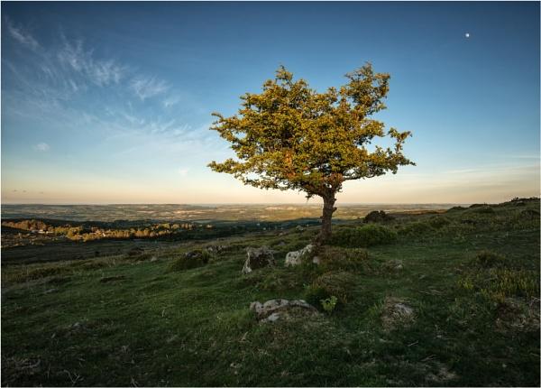 Haytor Tree #2 by RockArea