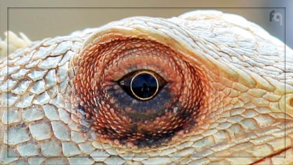 The Eye... by ferozeqasim