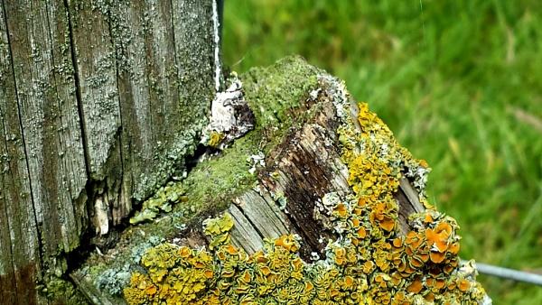 Friday\'s lichen... by Chinga