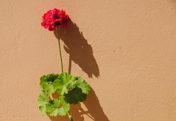 Shadows & colour by Chinga