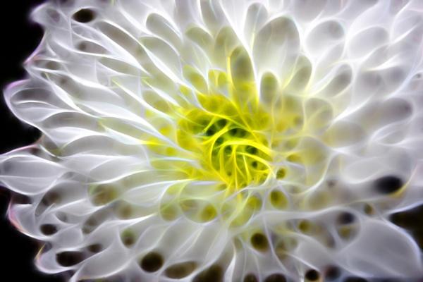 flower power by adrian2208
