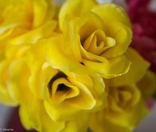 Macro Shot - Floral XX