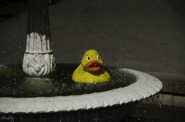 Bathtime. :) by pentaxpatty