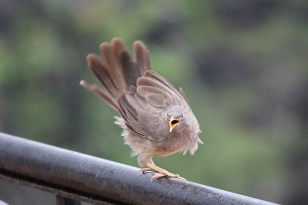 angry bird! by rajibcee1