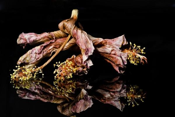 pre-trash flowers by Bolthead