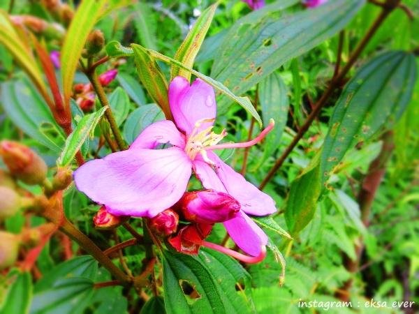 Bautiful Flower by jengger