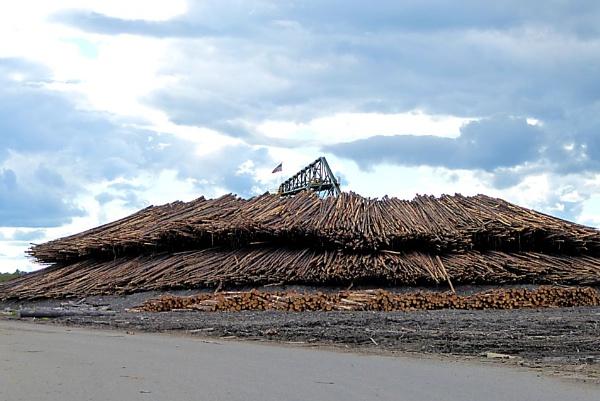 Log Yard by Joline