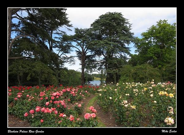 Blenheim Palace Rose Garden by oldgreyheron