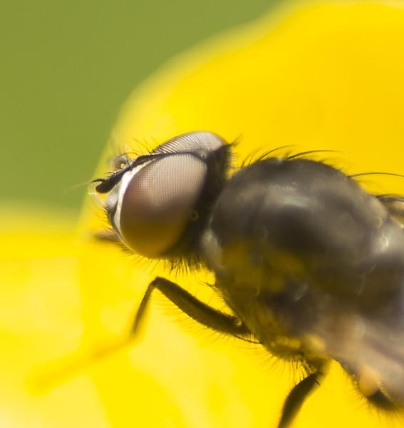 Fly eye by ednys