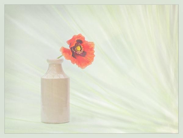 poppy & jar by maywee