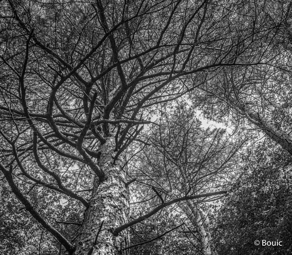 Tree Vortex by bouic