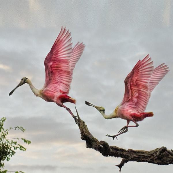 Rhapsody in pink by Tarrby