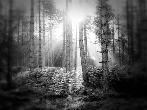 Into the light by steve_i