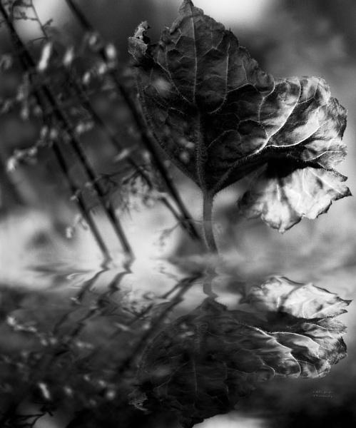 woodland by MileJanjic