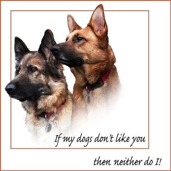 Delightful Dogs 1 (17 of 23) by LynneJoyce