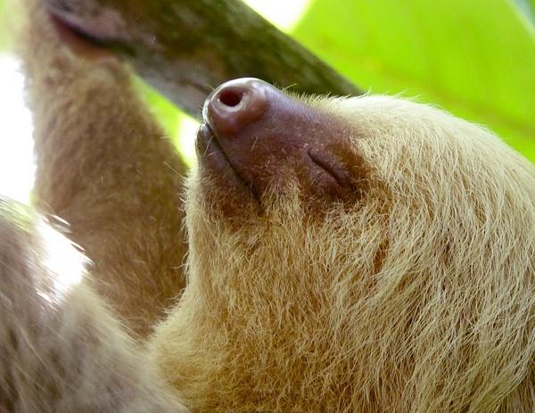 Happy Sloth by danwhite11