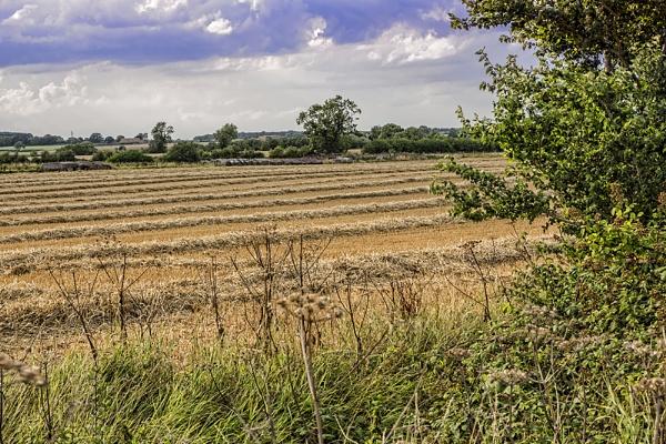 Harvest Landscape by GordonLack