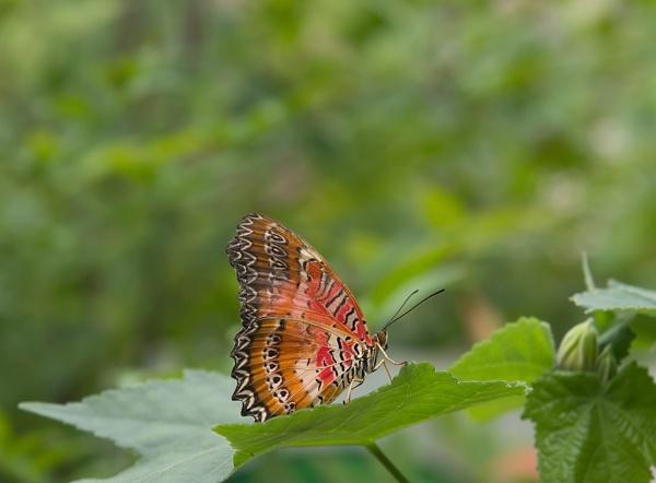 Butterfly by mondmagu