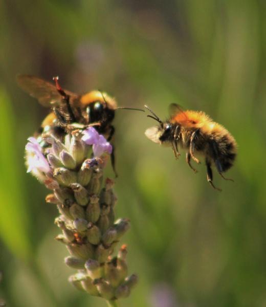 Buzz Off! by Fernowl