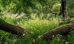Fallen Trees...