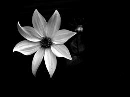 Lamp Light......2