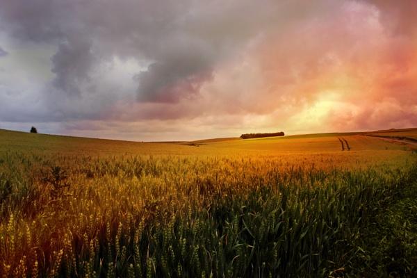 French fields by Rossitsa