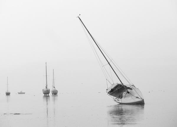 Sandpiper... by Greyheron