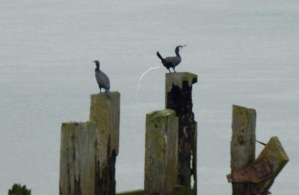 Watch the birdie ... oops! by Reetypips