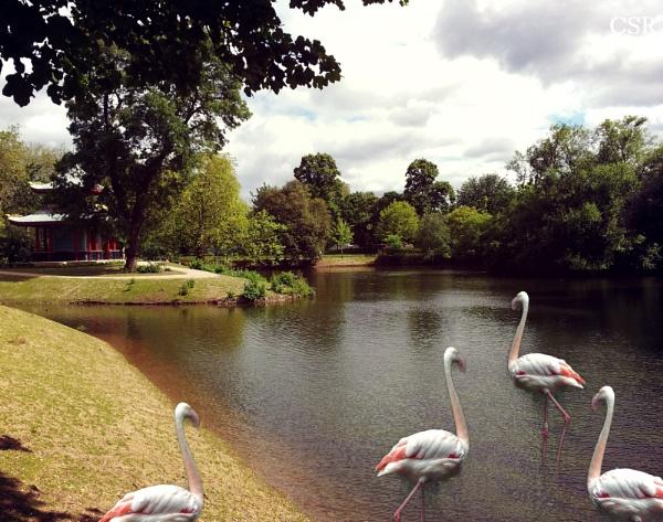 Flamingo Park by xGei8ht