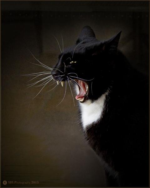 Mean Cat by Daisymaye