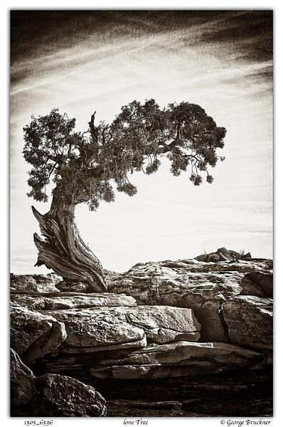 Lone Tree by rusty