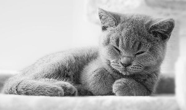 Sleepy by MartinWait