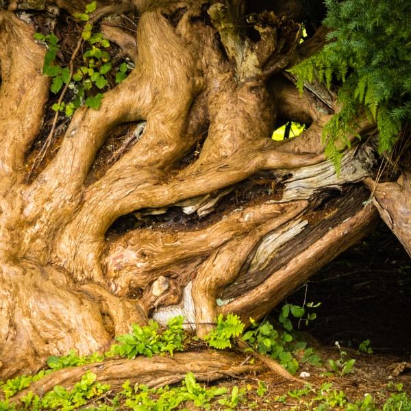 Spirit of the Tree by daibev