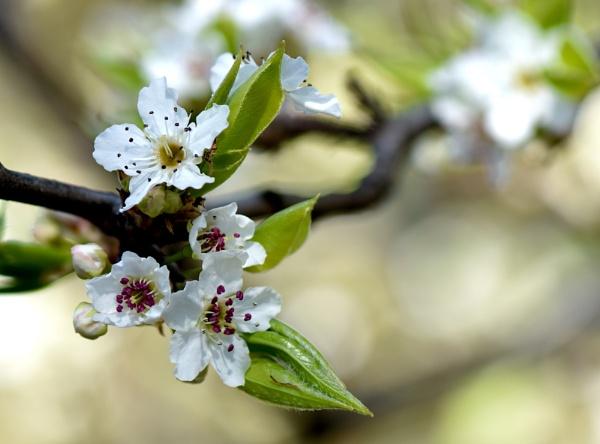 Spring awakening by ColleenA