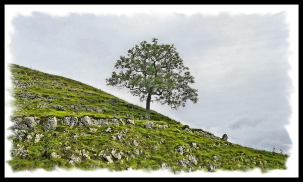 tree by c40uk