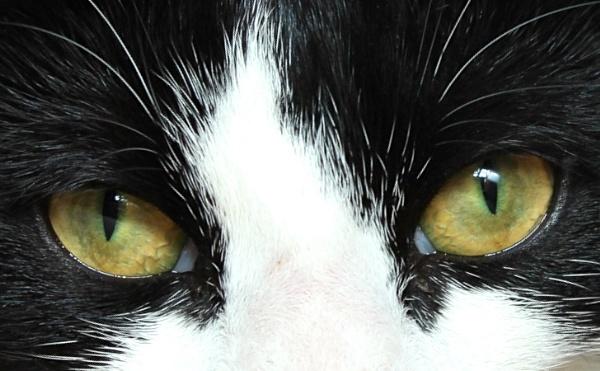 The eyes have it by geoffleckey