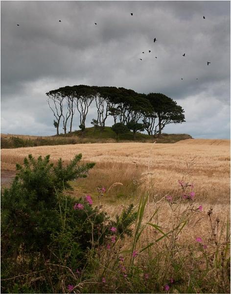 Crawton Trees 2 by MalcolmM