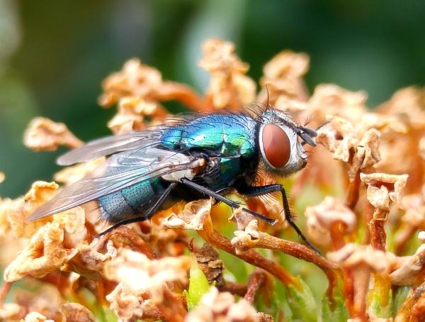 Fly by carlw