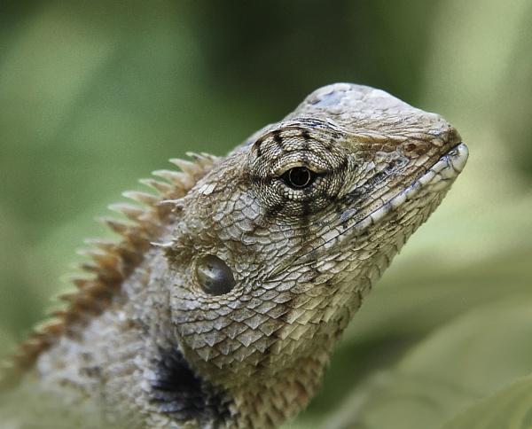 Portrait of a Lizard by DonMc