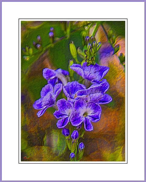 Blue Shrub#?3. by WesternRed