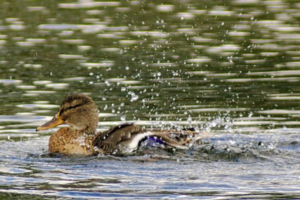 Having a splashing time