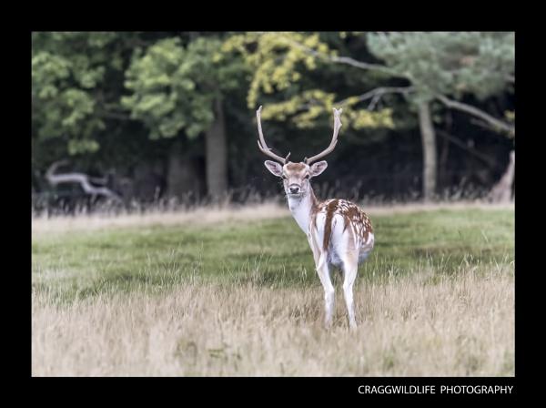 shropshire wildlife by craggwildlifephotography