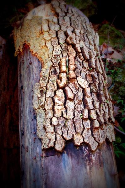 Dead Tree by Hmccdc