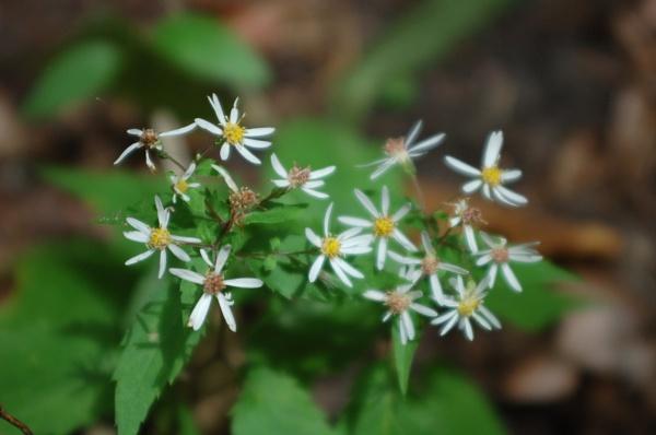 Flowers by Hmccdc