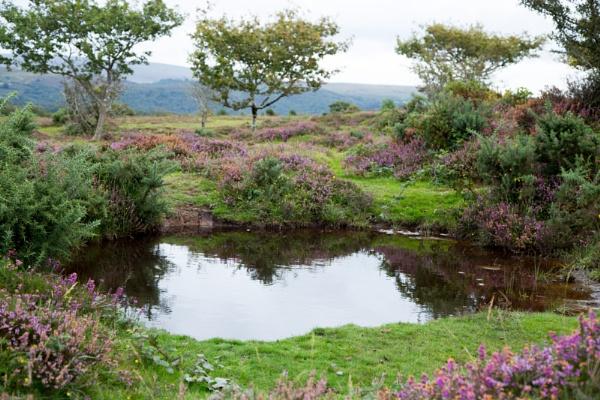 Water Hole on Dartmoor by LinBrennan