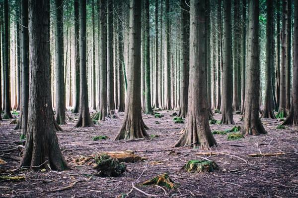 Caan Woods Again by Janboy