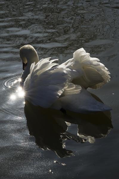 Sunshine Swan by Niceage